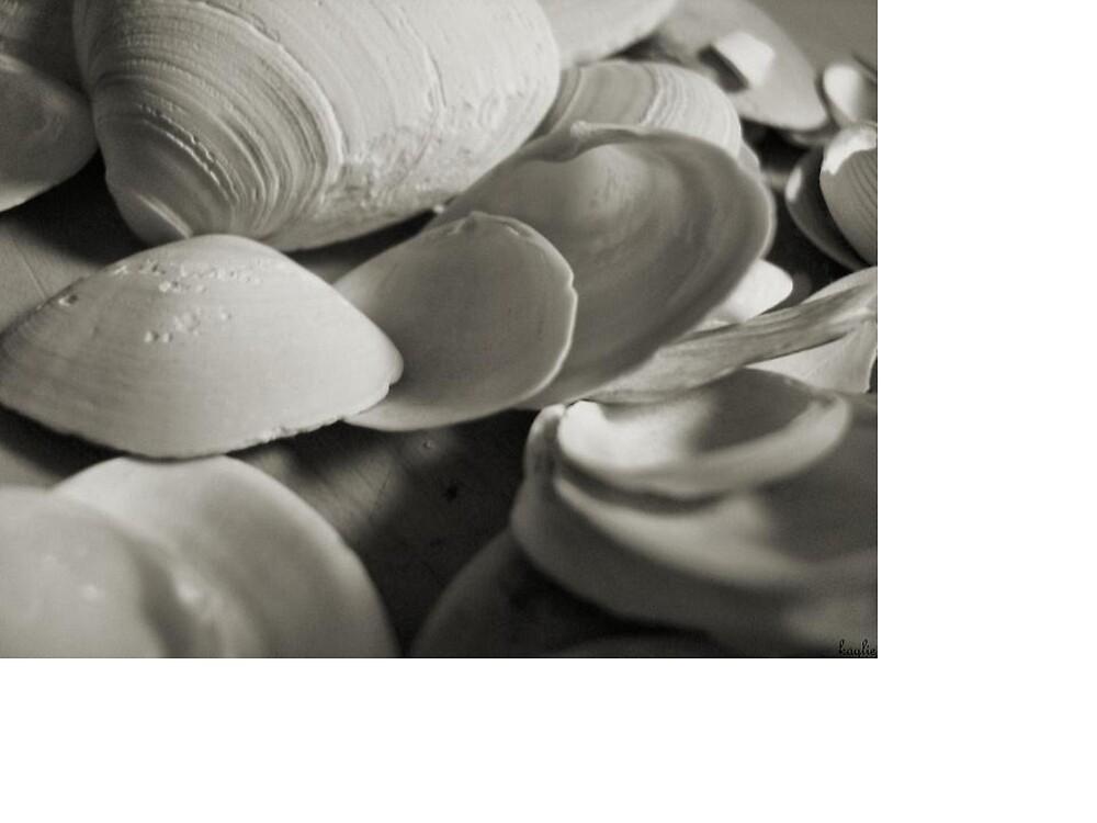 beach shells by kaylie4406
