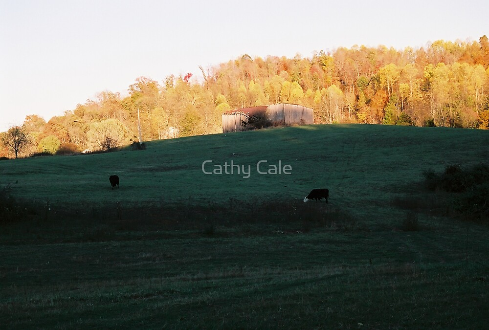 Grazing by Cathy Cale