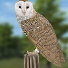 Barn Owl by Walter Colvin