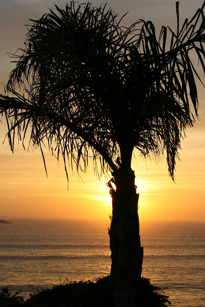 palm sunset by augigirl