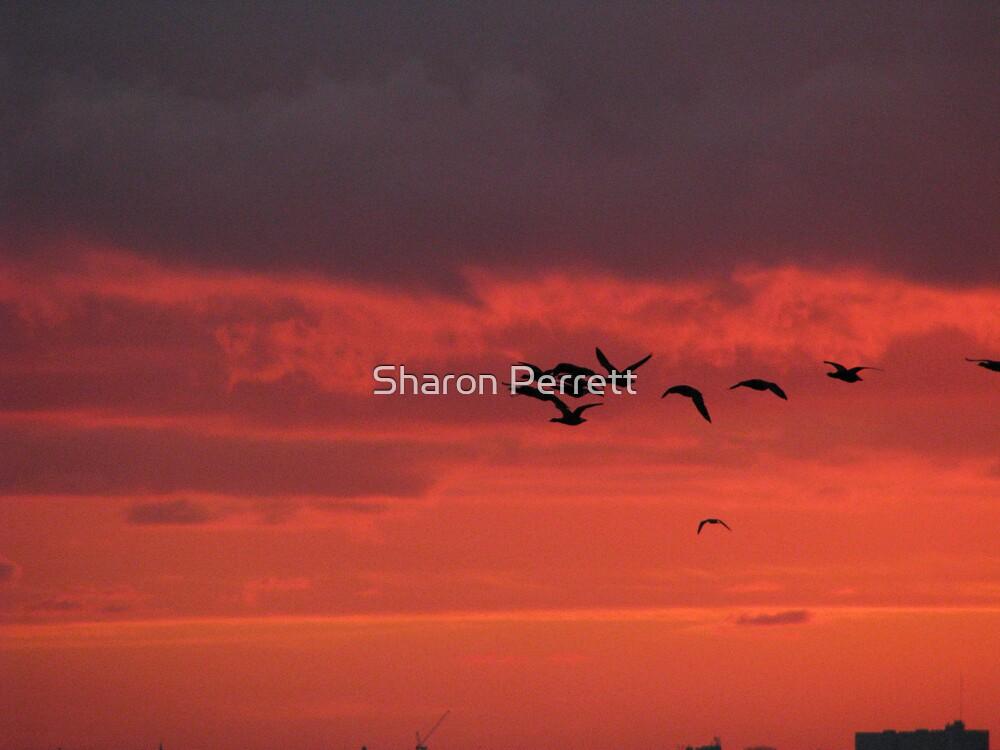 Sunset by Sharon Perrett