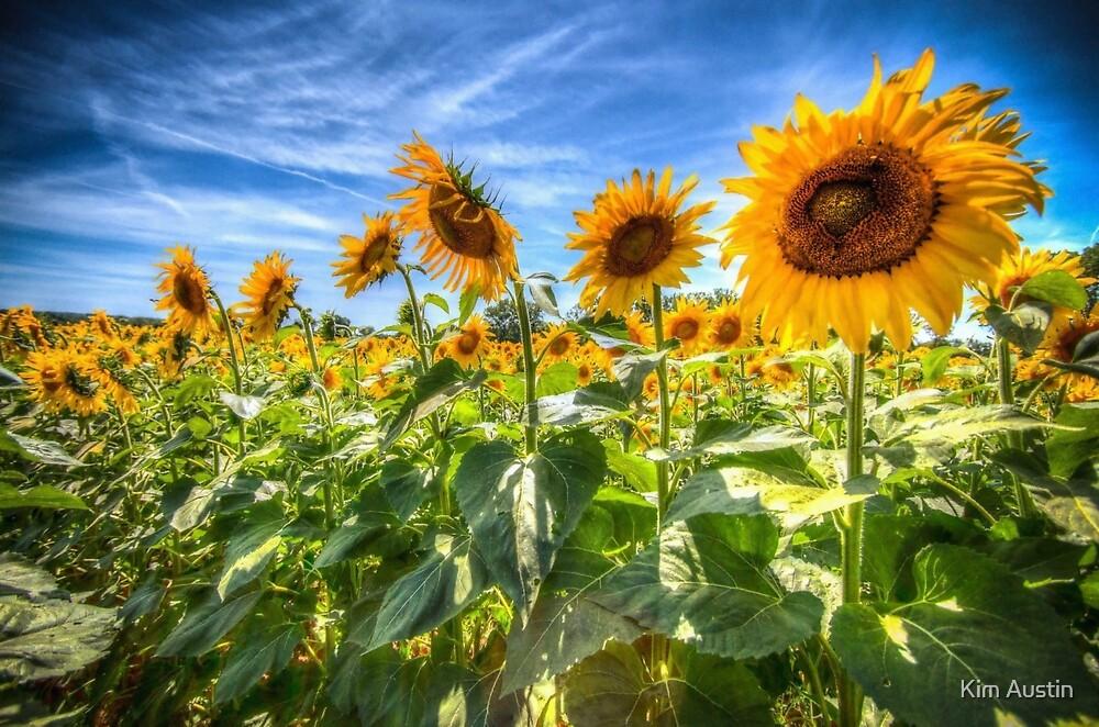 Sunflower Power! by Kim Austin