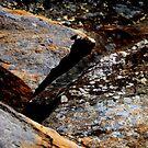 Cataract Gorge Rocks 1J by MyceanSage