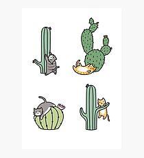 Cacti Cats Photographic Print