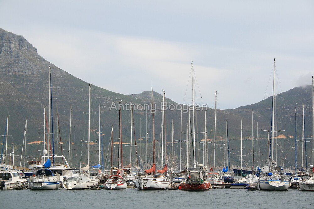 Yachts - Hout Bay Harbour by Anthony Booysen
