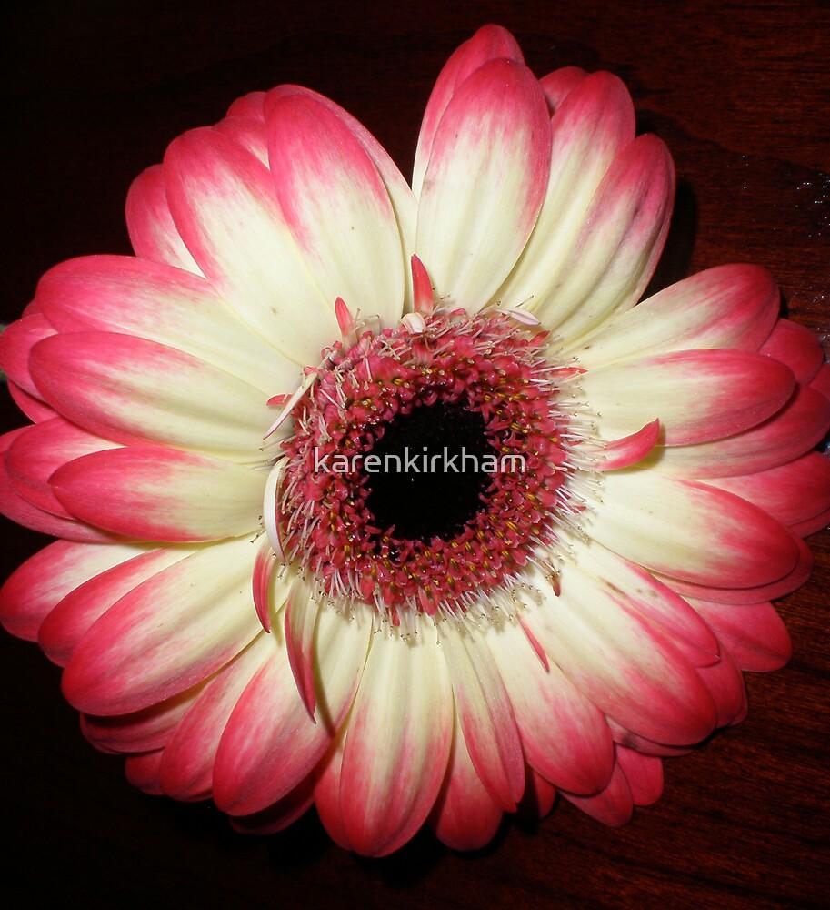 Pink tipped gerbera by karenkirkham