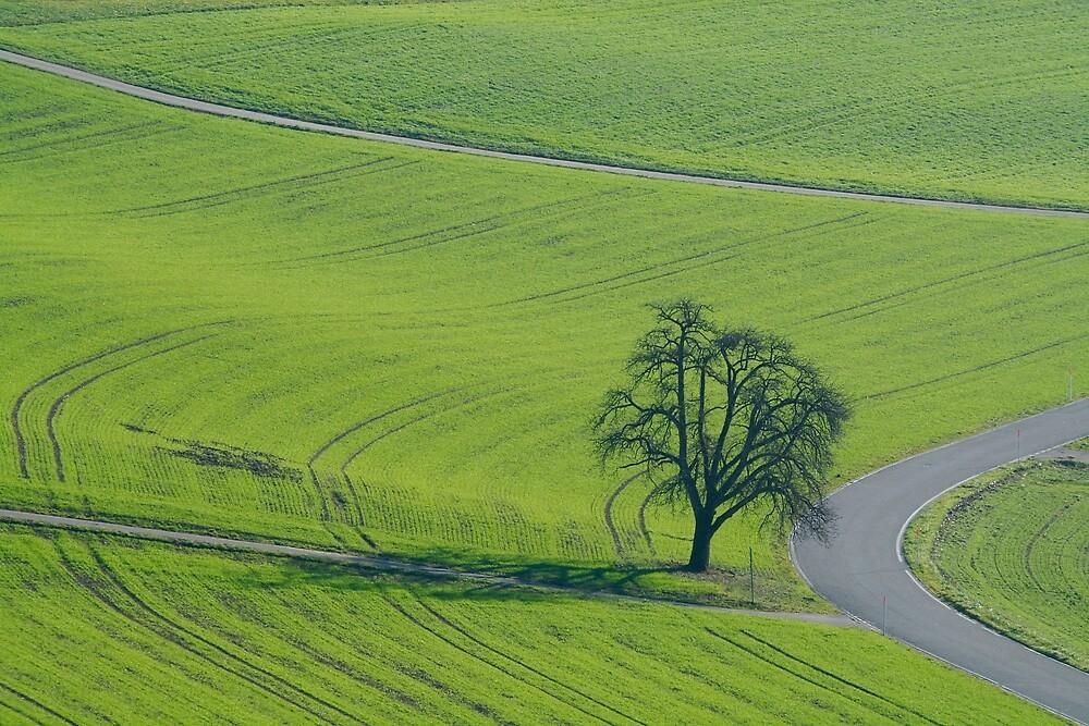 A Field A Road A Tree by Alexandra Lavizzari