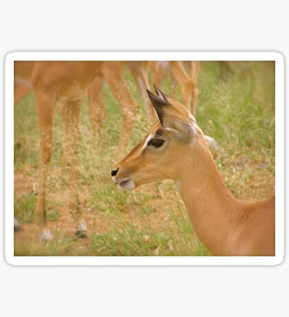 alert impala Sticker