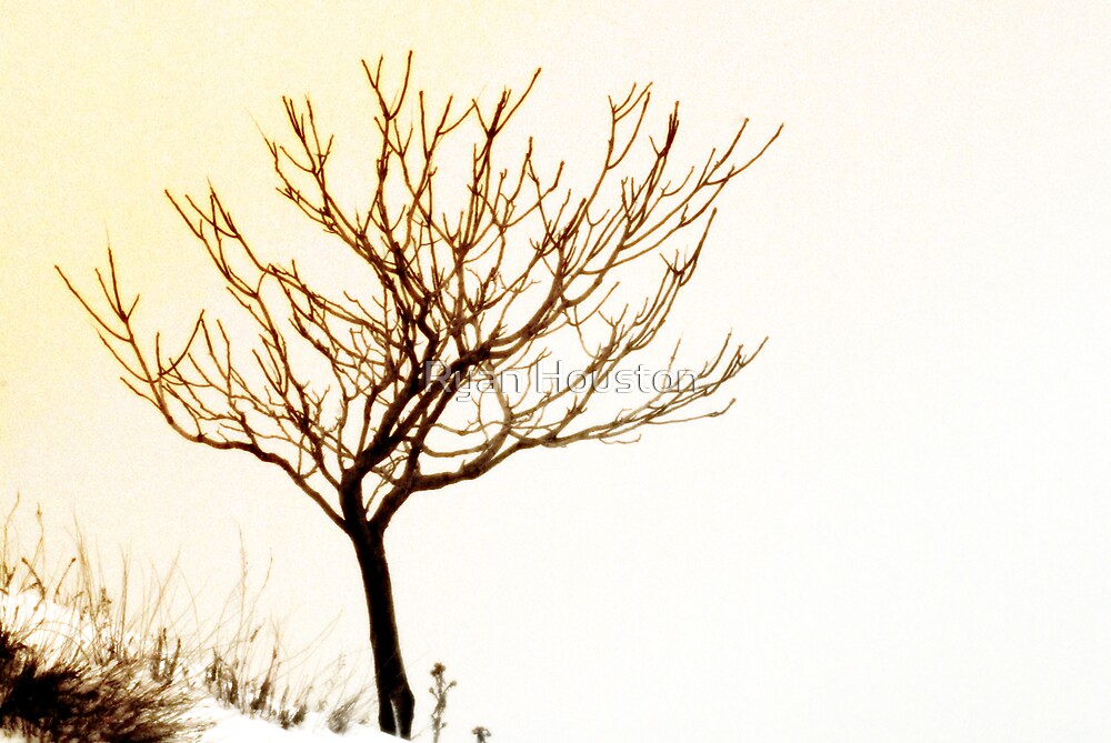 Solitary Tree by Ryan Houston