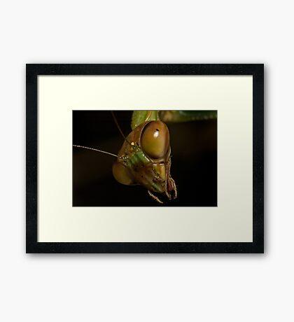Mantis Head Framed Print