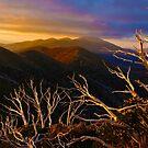 0389 Mt Hotham Brush by DavidsArt