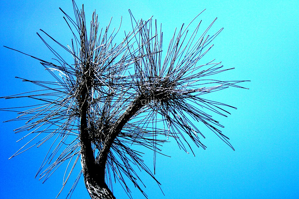 Cabbage Tree by Gill Duncan