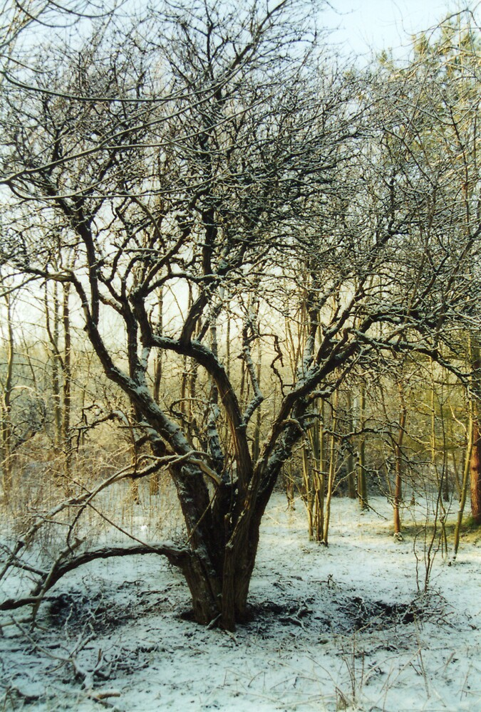 Winter Wonderland by ree81