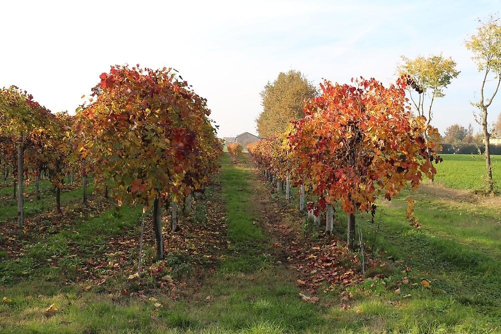 Vineyard by MartiCaselli