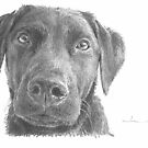 rescued black lab drawing by Mike Theuer