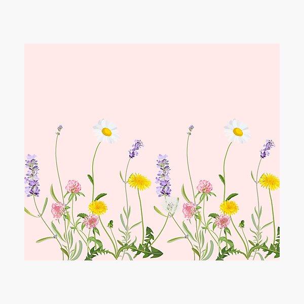Blush pink - wildflower dreams Photographic Print