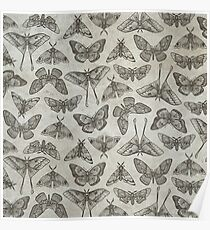 Lepidoptera Beige Poster