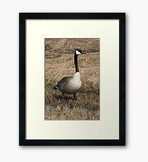 Lone Goose Framed Print