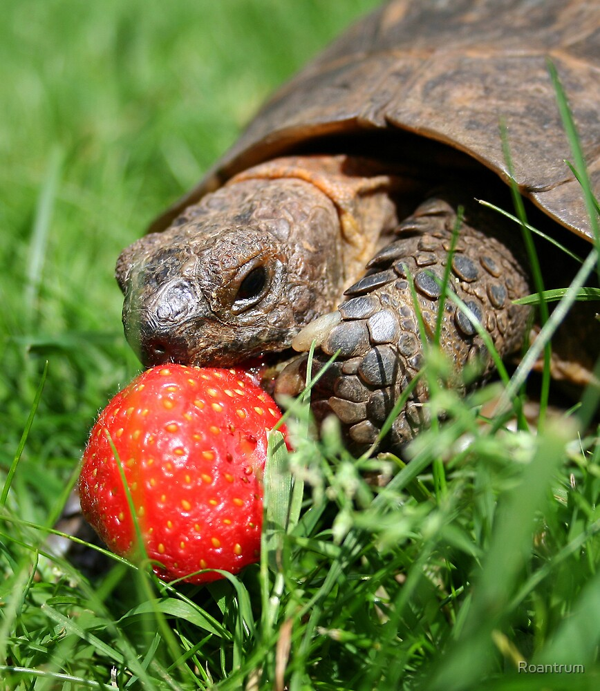 Mmm....Strawberries! My second favourite after buttercups by Roantrum