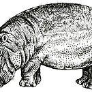 Hippo by Nicola Hanrahan
