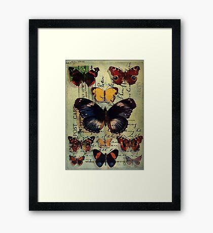 Postcard Butterflies Framed Print