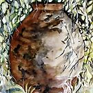 THE OLD POT by ISABEL ALFARROBINHA