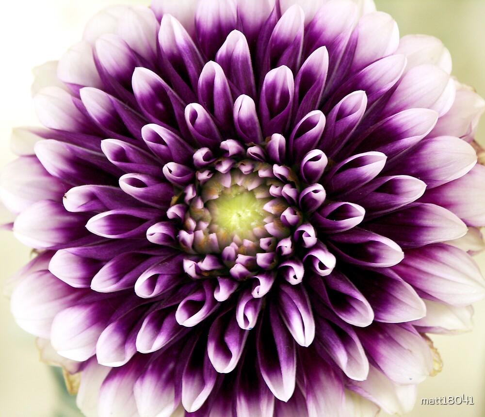 In Full Bloom by matt18041