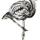 Flamingo by Nicola Hanrahan