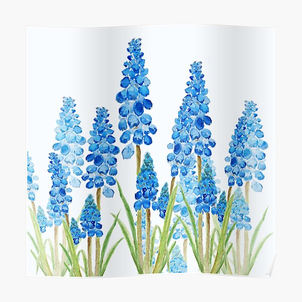 blue grape hyacinth forest  Poster