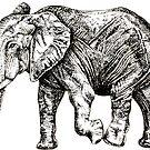 Elephant by Nicola Hanrahan