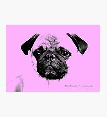 mops puppy baby pink Photographic Print