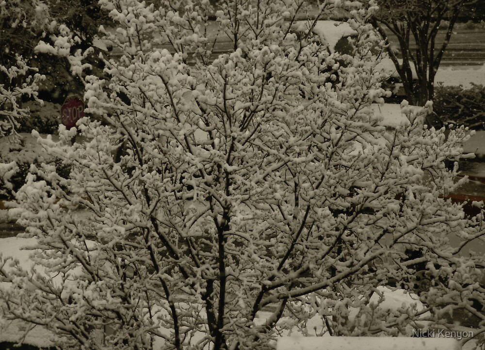 Snow from my boss' window by Nicki Kenyon