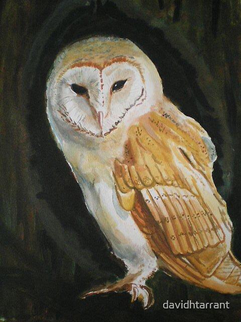 barn owl by davidhtarrant
