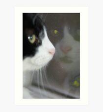 Binky in the Window Art Print