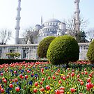 Blue Mosque Istanbul by Kiwikiwi