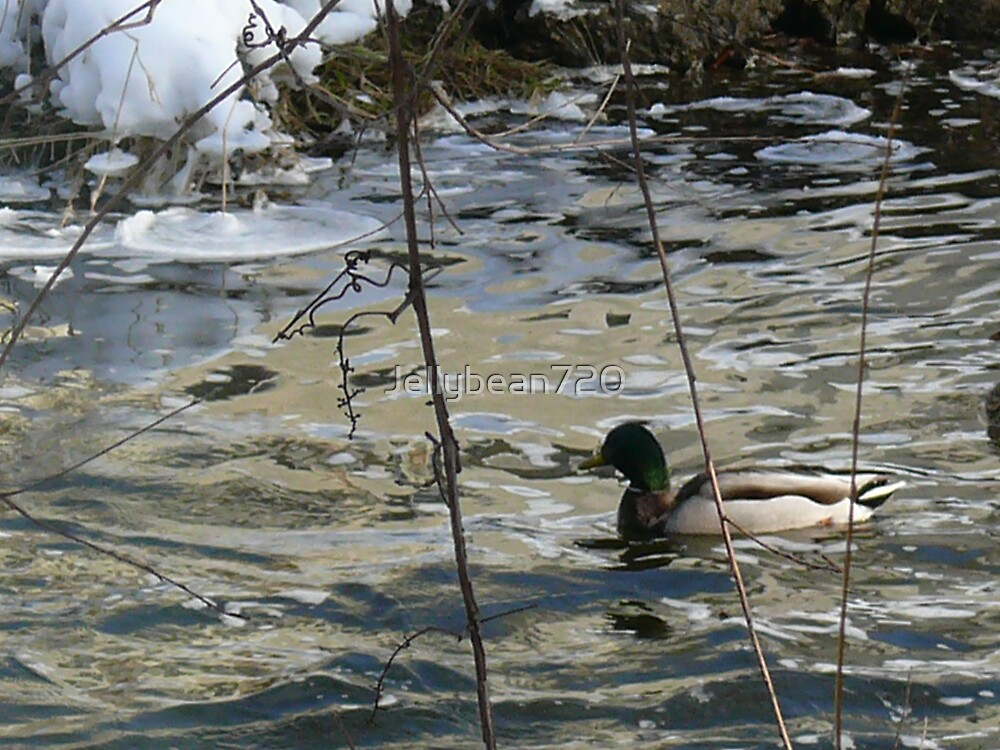 Just a Duck by Jellybean720