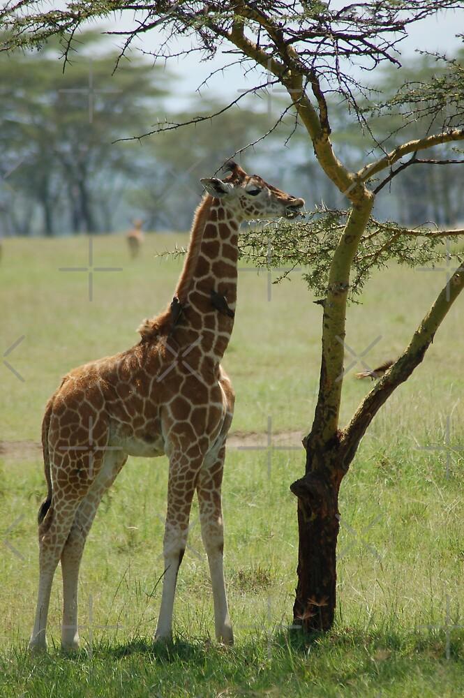 Little Giraffe by ApeArt