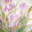 Irises in full glory by melaniereynoso