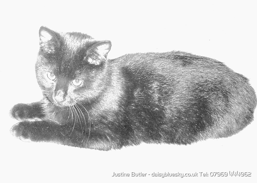 Fluffy The Kitten by Justine Butler - daisybluesky.co.uk Tel: 07969 444962