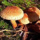 Toasty Warm Coloured Fungi by hootonles