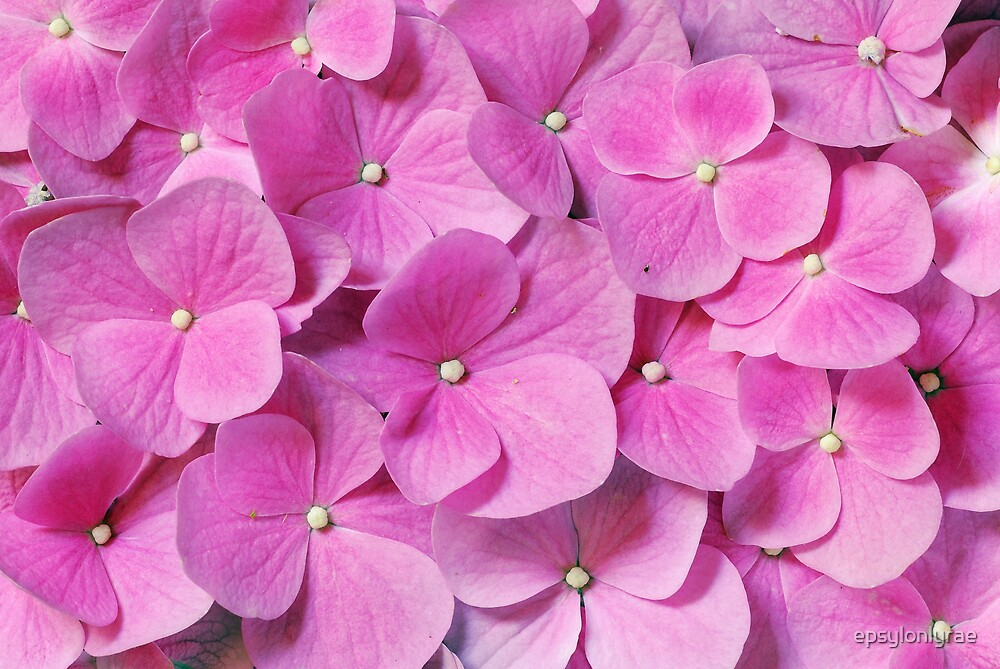 Pink power by epsylonlyrae