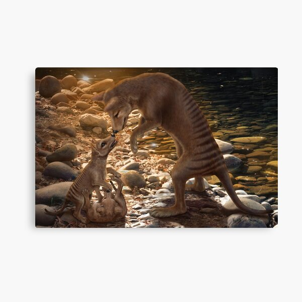 Afternoon Playtime - Thylacine Canvas Print