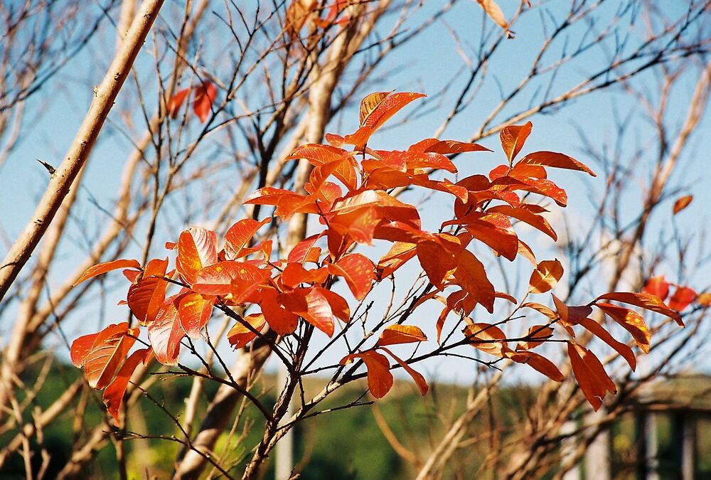 Autumn in Marin City, CA by stephen hewitt