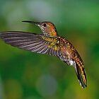 Green breast Mango female Hummingbird?? by Linda Sparks