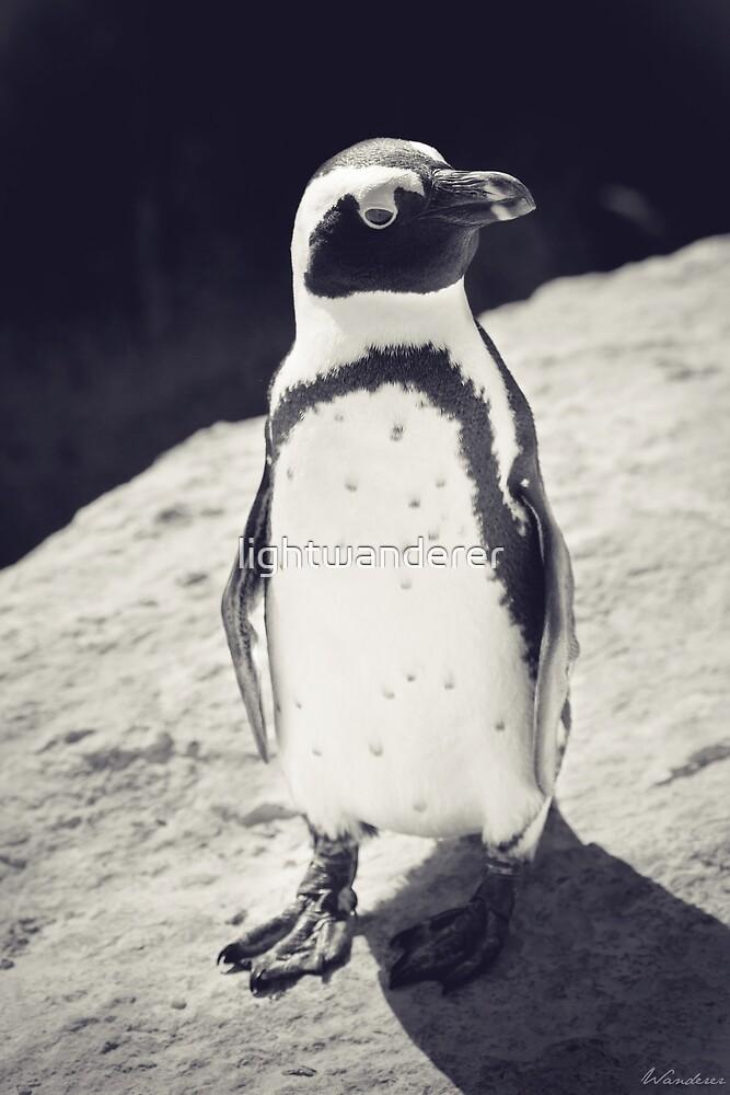 Penguin by lightwanderer