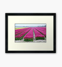 Dutch tulip field Framed Print