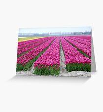 Dutch tulip field Greeting Card