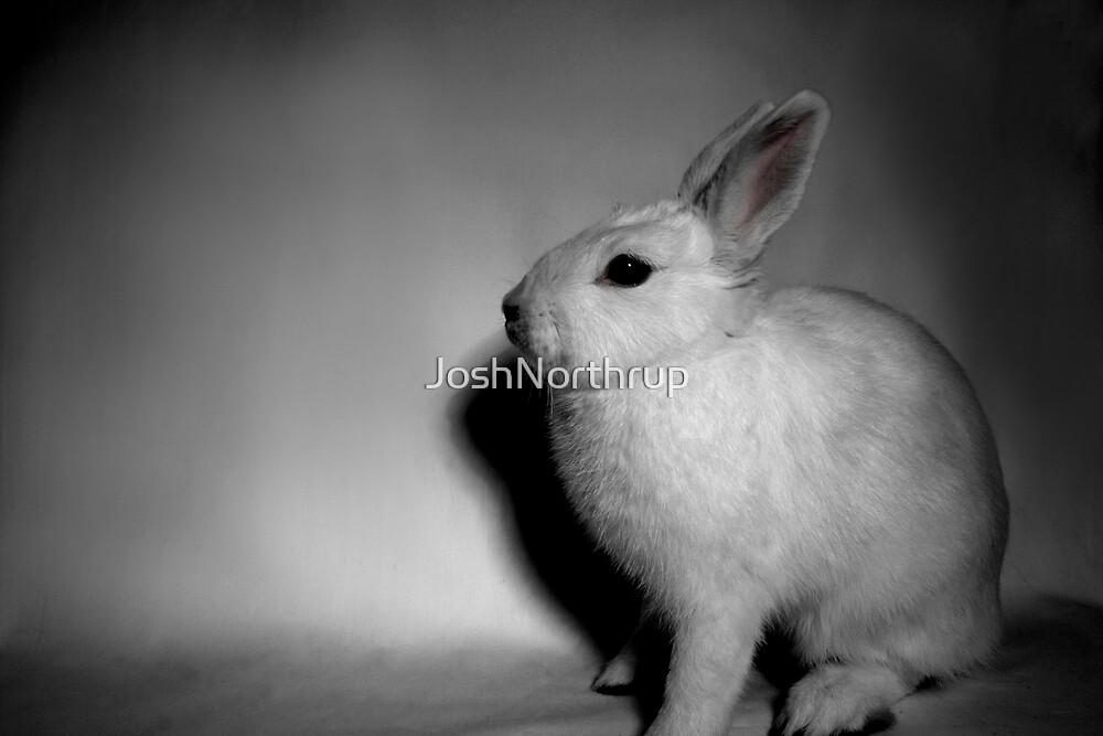 Bunny rabbit  by JoshNorthrup