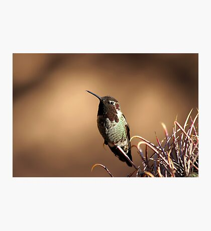 Hummingbird Photographic Print