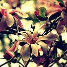 Ein Frühlingslied von Evita